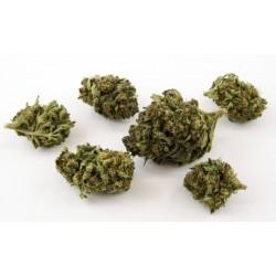 CBD: 3.7 % THC: 0.13 %