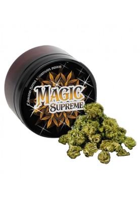 Magic Supreme Kush